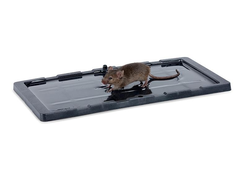 למעלה מלכודת דבק מקצועית למכרסמים, חולדות ועכברים TY-73